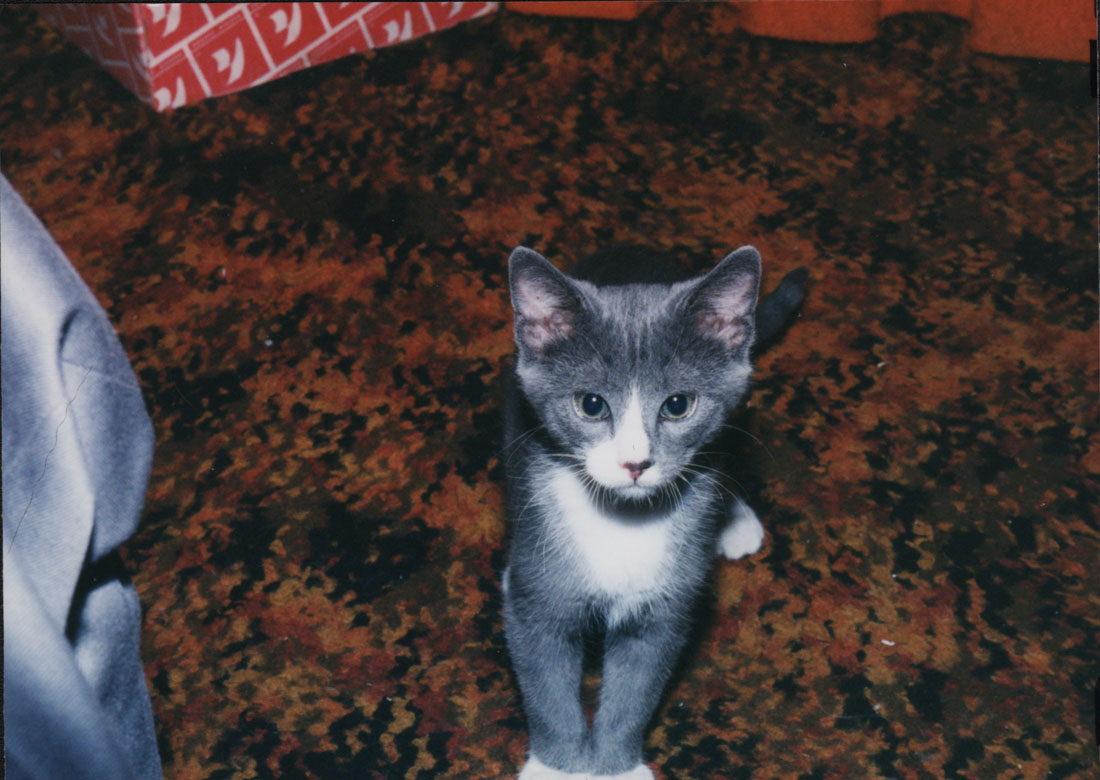 Cirrus' Baby Picture from July, 1999